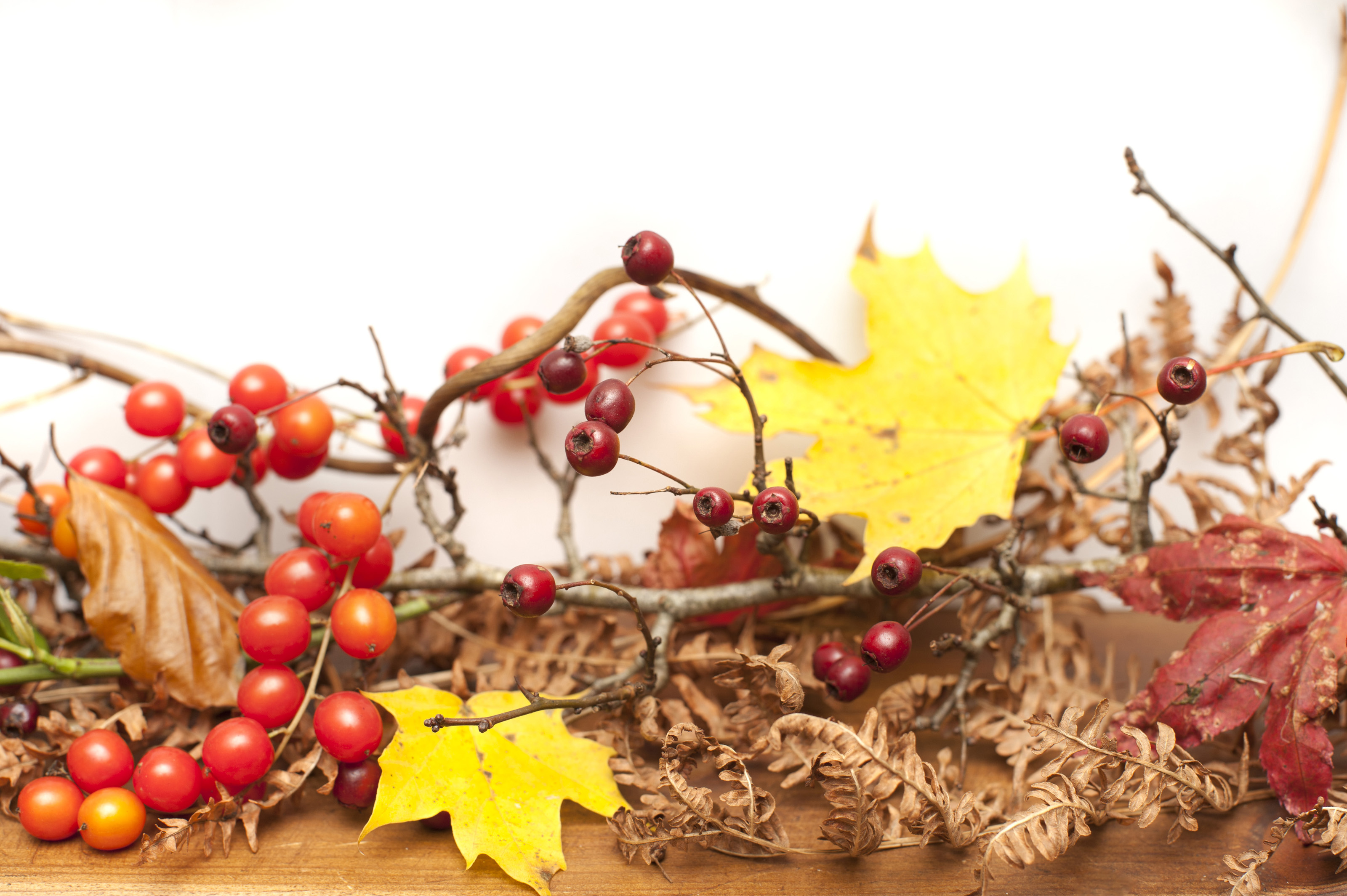 a display of autumn berries, leaves and foliage