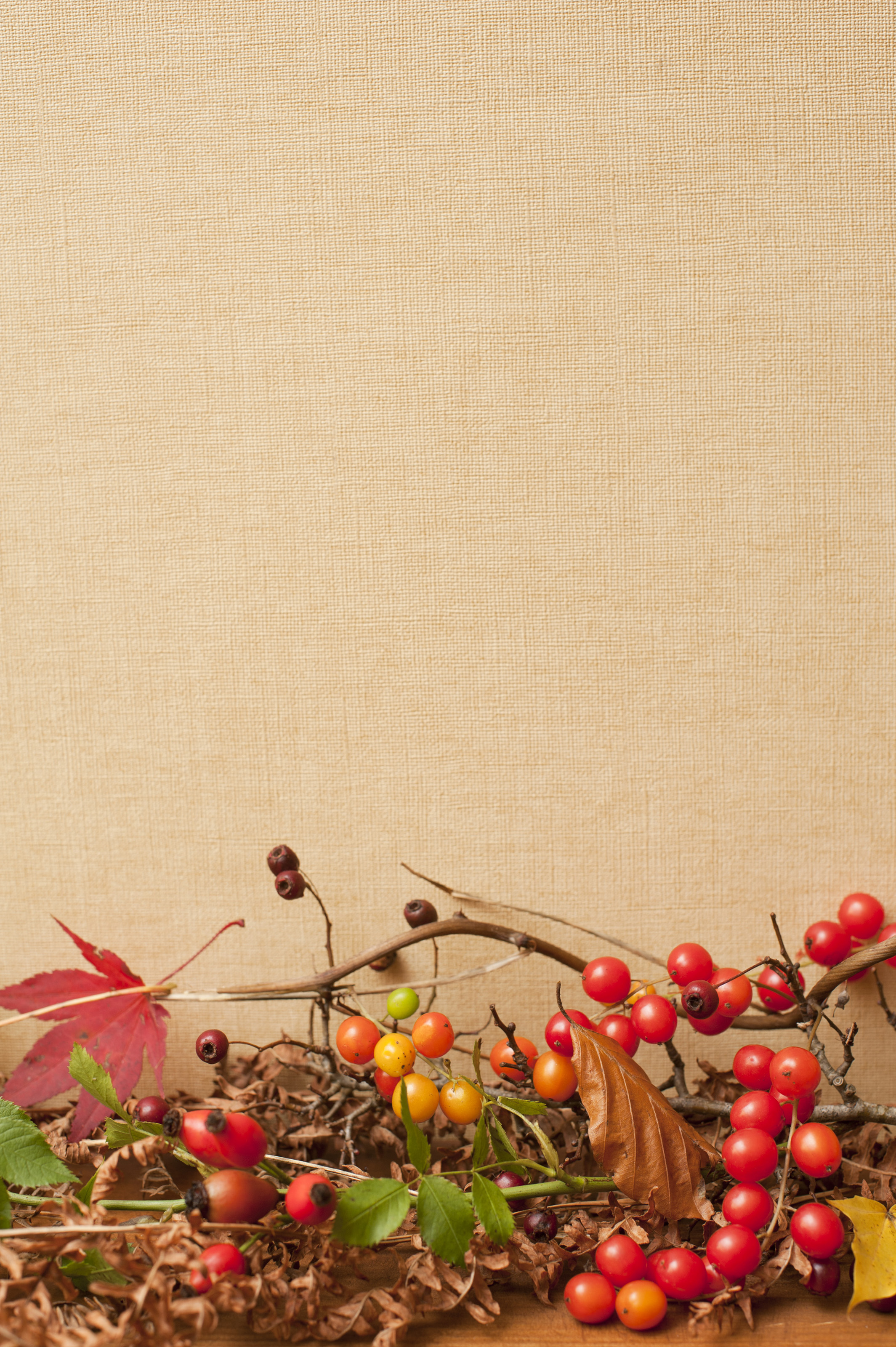 Autumn background with textured copyspace in vertical format with colorful fall leaves and berries in red and yellow