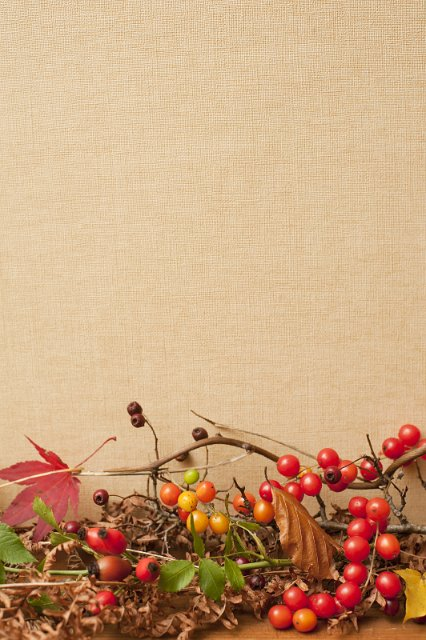 image of autumn background with copyspace