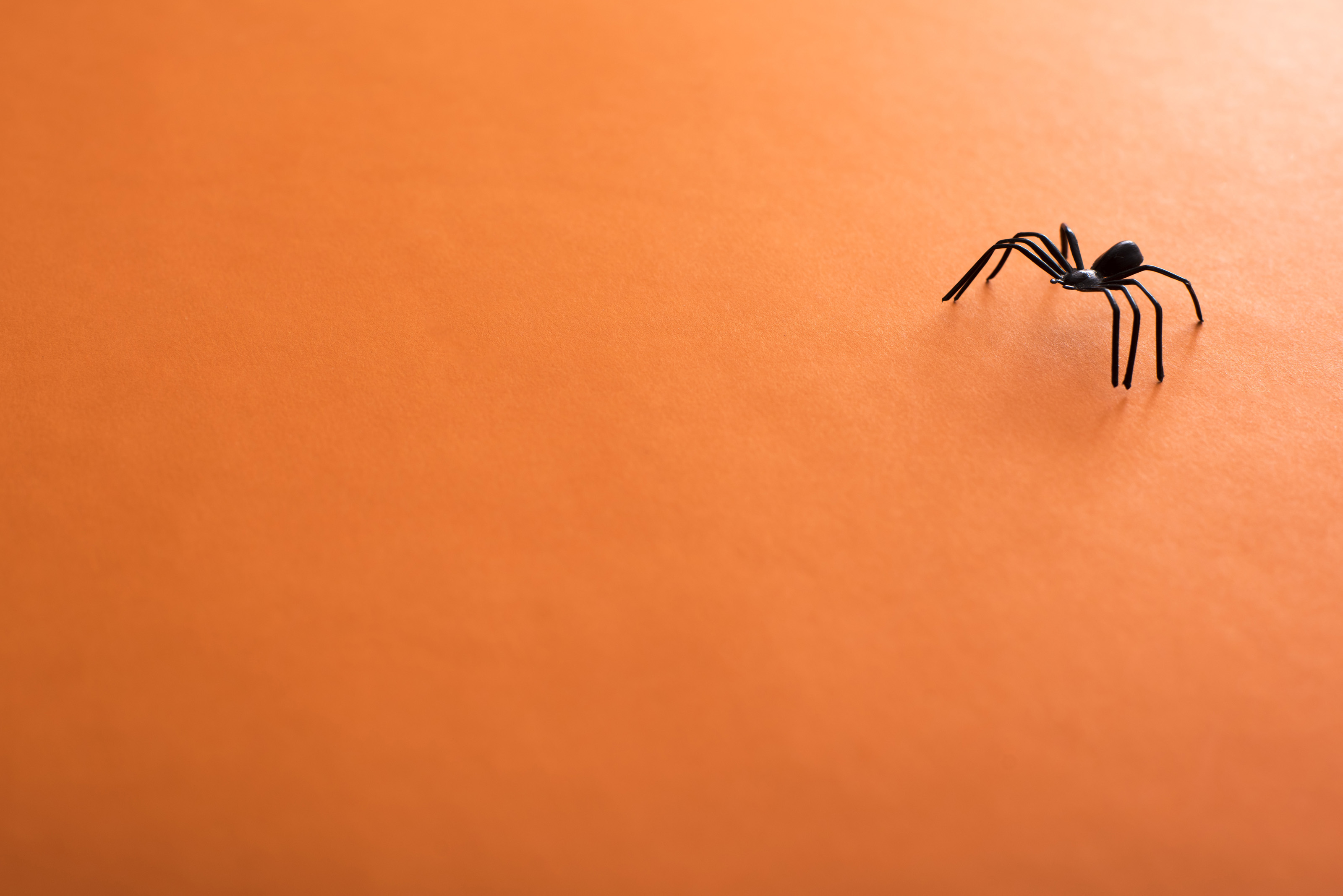 image of orange halloween background with spider