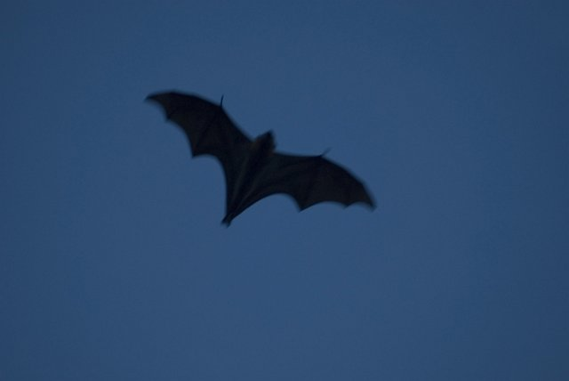 image of bat at dusk