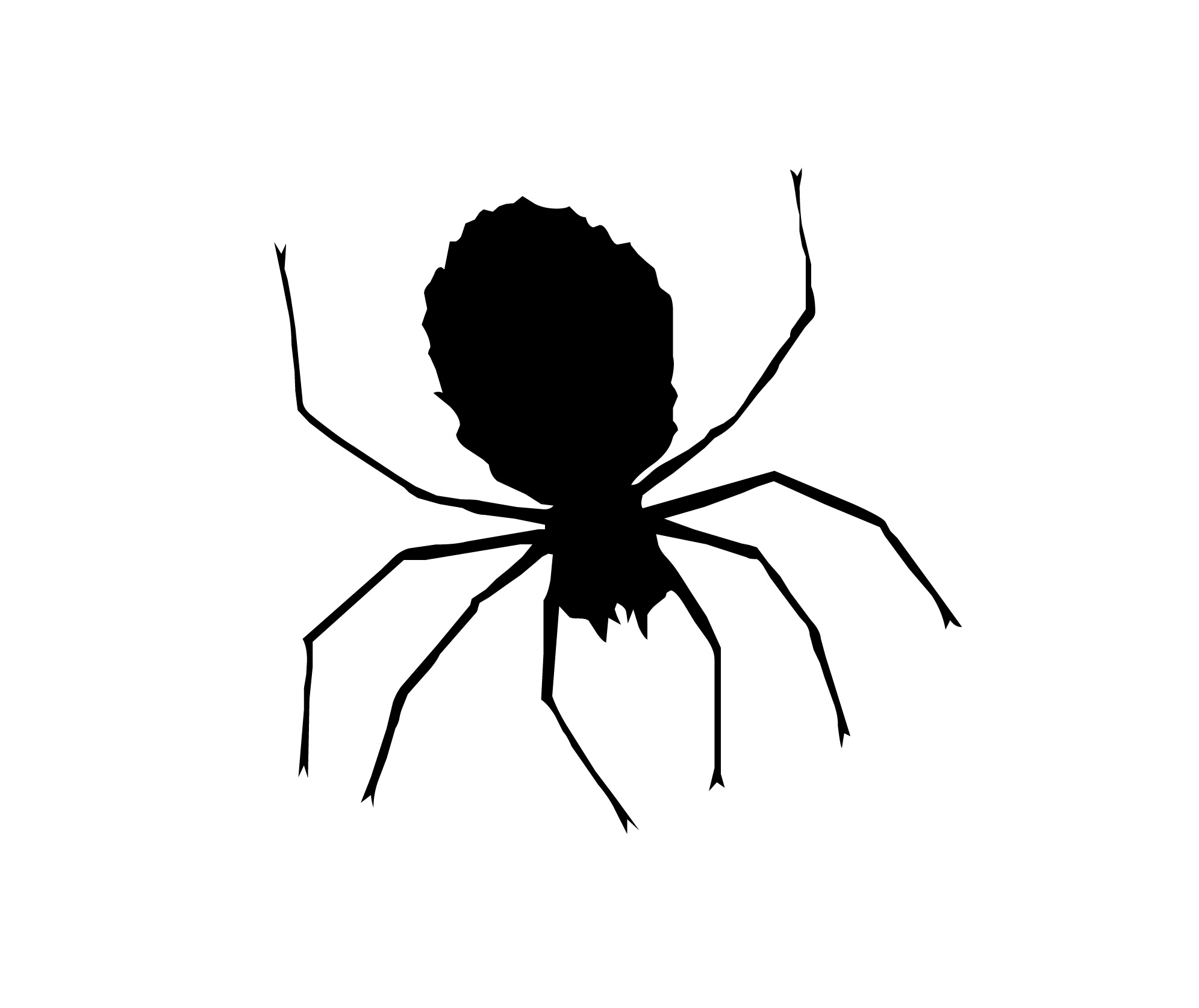 Drawing Of Spider