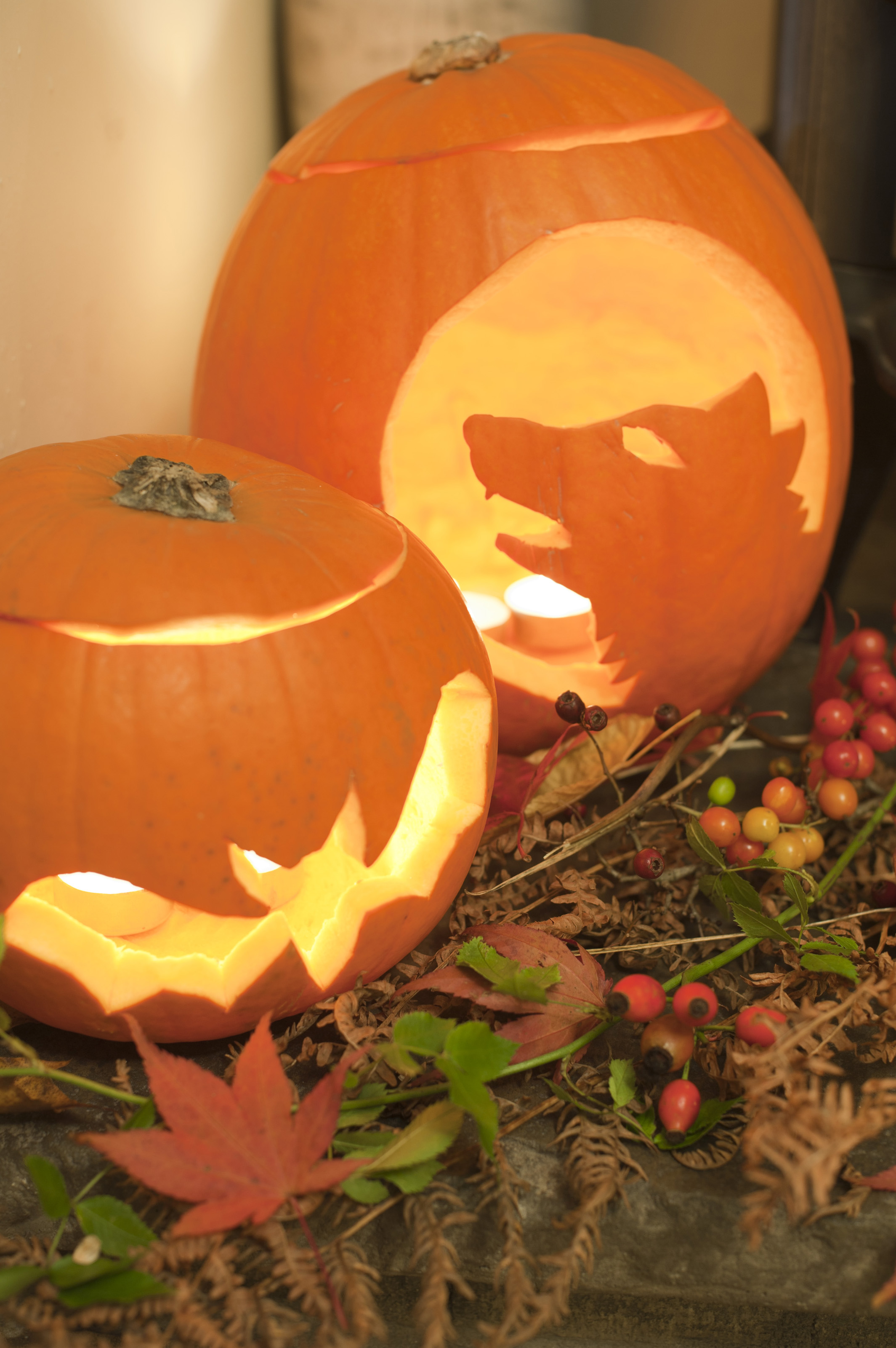 Two glowing Halloween Jack-o-lanterns with a display of colorful autumn or fall berries and leaves, one with a bat pattern and one a wolf or werewolf howling at the moon