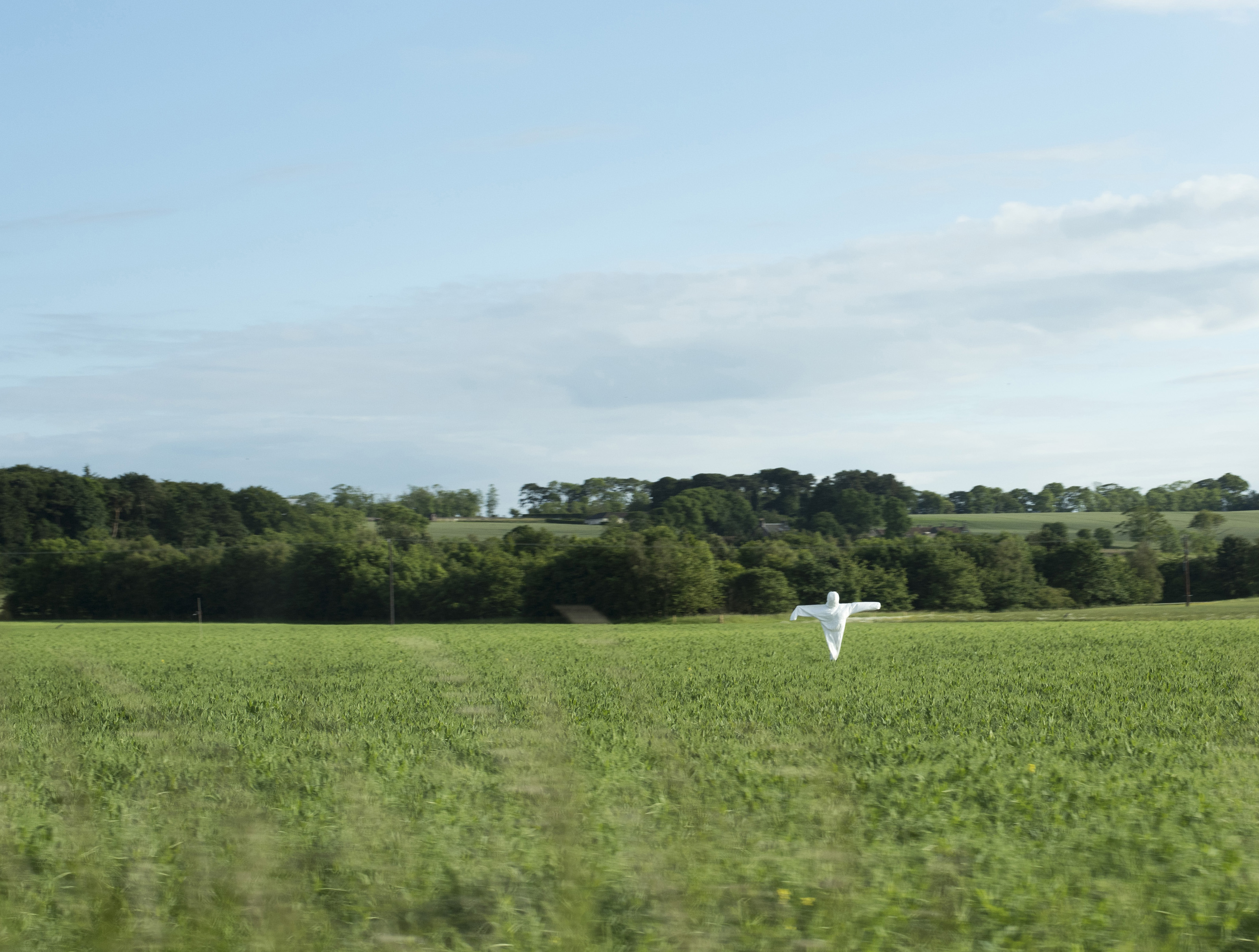 Agricultural field with a white scarecrow to frighten away the crows from a ripening crop in a rural landscape with copy space