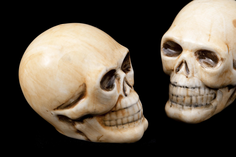 Head Bones